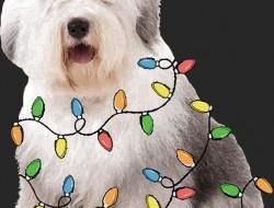 Vianočný pes